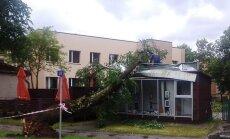 Foto: Spēcīgais vējš Carnikavā kioskam uzgāž pamatīgu koku