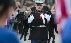 Aizkustinoši kadri: ASV izrāda militāru godu ar vēzi slimam dienesta sunim