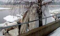 Foto: Kurš kuru – Daugavas ledus pret bērziem Jēkabpilī