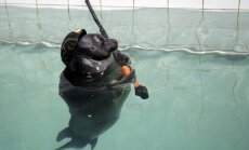 Iespējams tikai Krievijā: roņi saģērbti militāristu formās