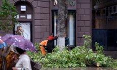 Saratovā strādnieki nozāģētu koku gāž virsū cilvēkiem