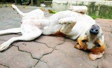 Suņu uzvedības rokasgrāmata jeb Kāpēc mīluļi veic dažādas dīvainas darbības