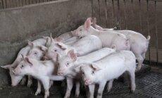 Atcelta karantīna ap ĀCM skarto saimniecību Saldus novada Zaņas pagastā