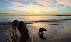 Divu dāmu romantisks foto atraisa interneta huligānu fantāziju
