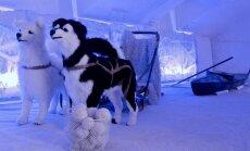 Igaunijas polārpētnieka muiža, kur var baudīt ziemeļu elpu un braukt suņu pajūgā