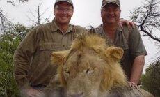 Zimbabves slaveno lauvu nošāvis amerikāņu zobārsts, kurš iepriekš sodīts par lāča medībām