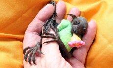 Džonijs Deps adoptējis netipisku dzīvnieciņu - sikspārni