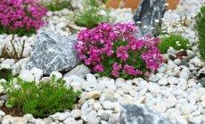 Soli pa solim: kā izveidot skaistu alpināriju jeb akmensdārzu