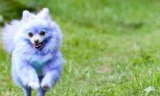 Interneta zvaigzne: violets suns, kas pelna tūkstošus