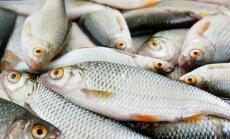PVD līdz decembra vidum plāno atbildēt 'Rosseļhoznadzor'; pārbaudīti visi zivrūpnieki