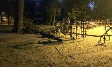 Foto: Bērnu laukumiņā Ķengaragā nogāžas papeles zars
