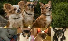 Pieci suņi un četri kaķi: friziere Ieva atrod laiku deviņiem mājdzīvniekiem