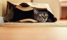 Sešas neparastas kaķu izdarības un to skaidrojumi