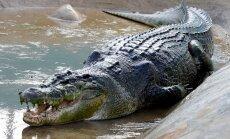 Nakts peldes laikā sievietei Austrālijā uzbrucis krokodils