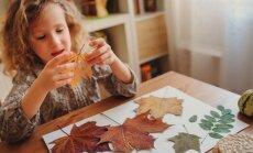 Radoša nodarbe rudens drēgnajiem vakariem – herbāriju veidošana