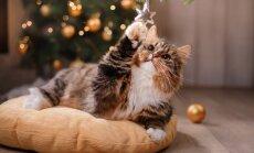 Septiņi iemesli, kāpēc Ziemassvētki ir kaķa laimīgākais laiks