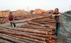 ES lētāk varēs ievest priedes un egles koksni no Krievijas