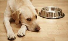 'Dogo' sāga: portāls 'Ziedot.lv' sāk ziedojumu vākšanu slimības izpētei