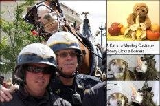 42 смешных фото, которые подарят тебе идею для твоего следующего смешного фото