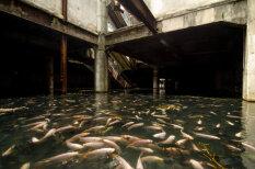 """ФОТО. Тайна заброшенного и """"захваченного"""" рыбой торгового центра"""