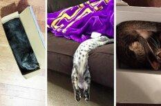 Законам природы вопреки: 10 доказательств того, что коты — это жидкость