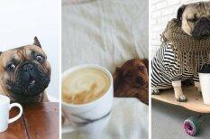 Кофедоги: 10 собак, которые любят кофе так же, как и ты (хотя наверняка сильнее)