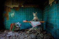 Bulterjers, kuram patīk fotografēties pamestās vietās Eiropā