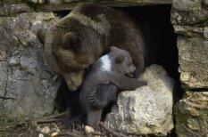 Piemīlīgi dzīvnieki vecāku lomās