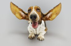 Noderīgs 'špikeris' suņu valodas apguvei un tulkošanai
