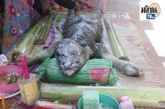 Taizemē atrasts monstrs – pa pusei bifelis, pa pusei krokodils