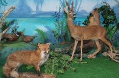 Aizraujoši meža muzeji Latvijā