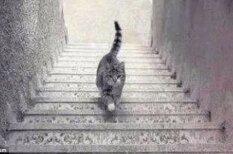 Этот кот расколол интернет — он идет вверх или вниз по лестнице?
