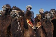 Iespējams, stilīgākais brīvā laika pavadīšanas veids: Jāšana ar kamieļiem