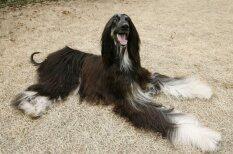 Jau 10 gadi: kā tagad klājas pasaulē pirmajam klonētajam sunim