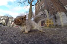 ВИДЕО: Белка украла камеру GoPro - отомстила человеку, который смеялся над ней