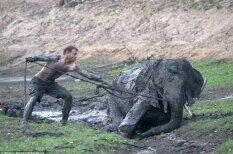 Люди рисковали жизнью ради спасения слоненка, но все закончилось довольно грустно