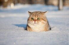 Осторожно, котолюбовь! 17 избранных работ латвийского фотографа-анималиста Тесс