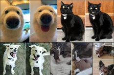 Интернет доказал, что доброе слово приятно только собаке, а кошкам — все равно (17 фото)
