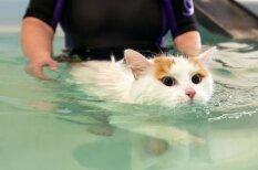 Ļoti neparasts kaķis, kuram patīk peldēties vannā