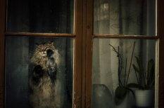 20 меланхоличных котиков, которые ждут возвращения своих людей домой