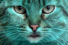 Bulgārijā pa ielām atkal sācis klīst slavenais zaļais kaķis