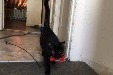 18 шокирующих ФОТО и ВИДЕО котиков, которые ведут себя как… последние собаки!!!