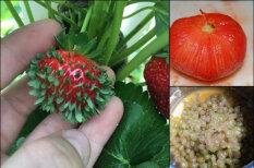 """От проросшей клубники до """"голого"""" винограда: 19 фото еды, от которых немного не по себе"""