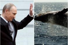 """Если Путин на кита залезет, кто кого поборет? Четыре ответа на вечные вопросы """"кто сильнее"""""""