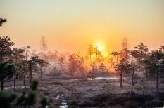 Невероятно красивый весенний рассвет на родных болотах в Кемери