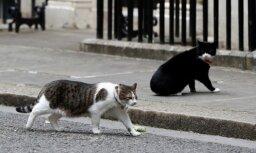 Главный мышелов премьера Британии подрался с котом из МИДа