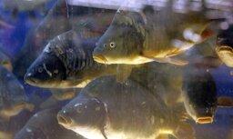 Zivju fonda valsts budžeta dotāciju nākamgad palielinās par 207 723 eiro