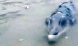 Video: Ķīnieši no jūras izvilkuši dīvainu radījumu