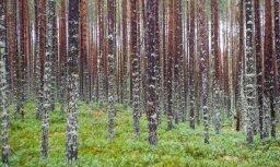 Trešdien izglābj četrus mežā apmaldījušos cilvēkus