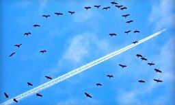 NBS un Vācija virs Latvijas veiks novērošanas mācību lidojumu